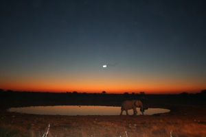elephant_watering_hole